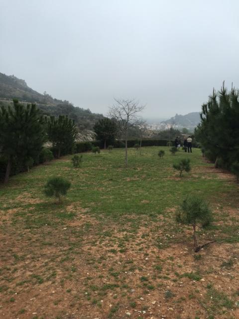 Acondicionamiento de zona forestal en Ráfol de Almunia
